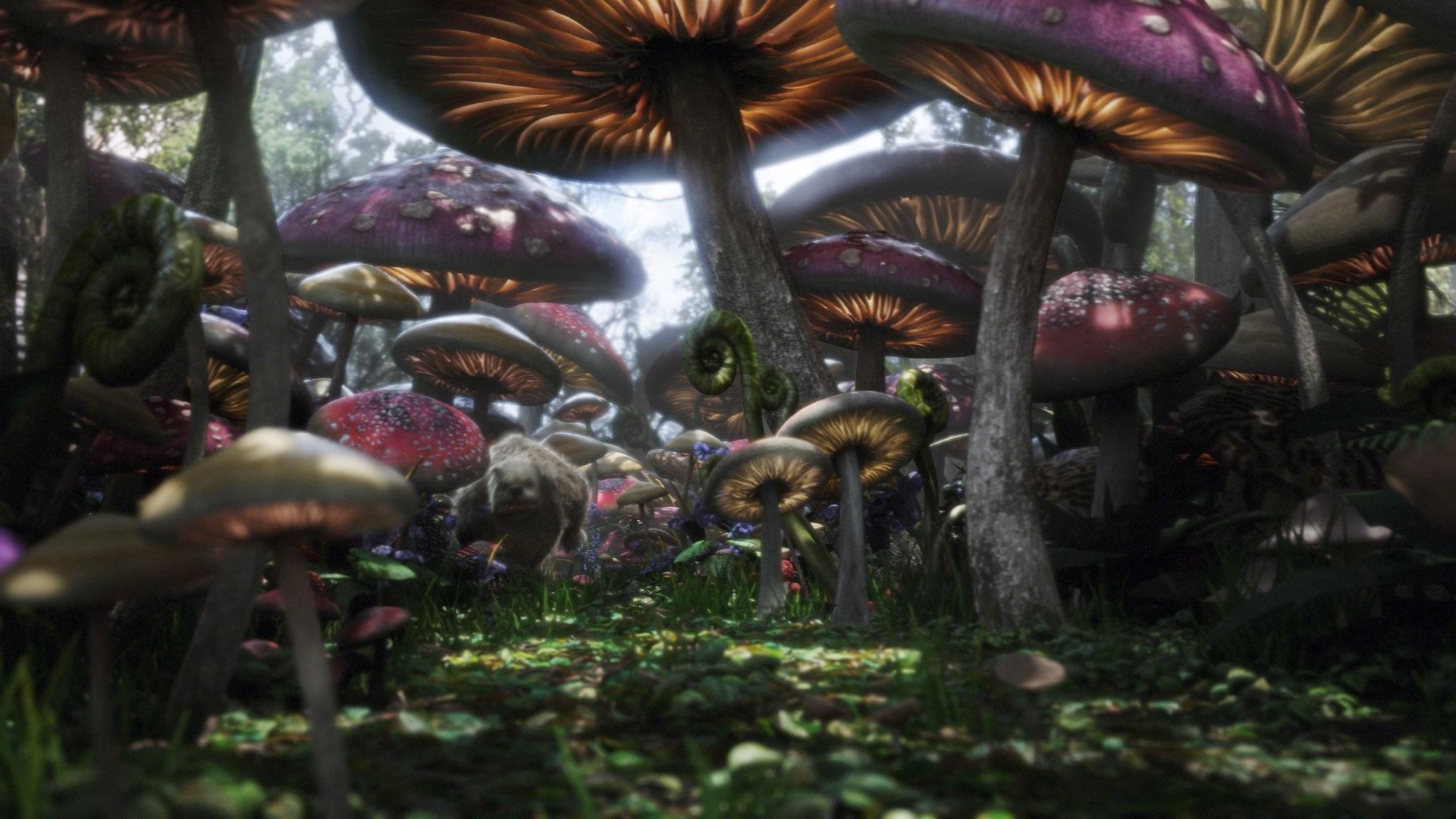 alice-mushrooms