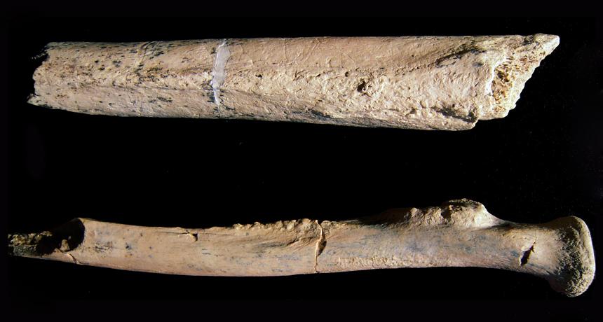 José de Abreu (iii) : Os ossos do Barão